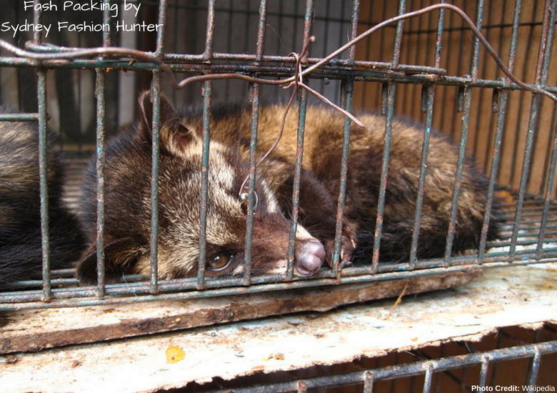 Fash Packing by Sydney Fashion Hunter: 23 Unexpected Things To Do In Bali - Civet Cat In Cage