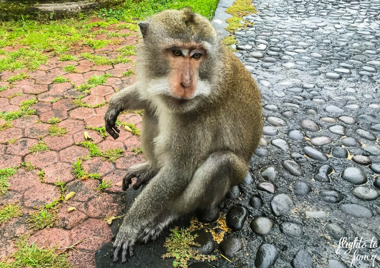 Flights To Fancy: 100+ Things To Do In Bali - Monkey Forest