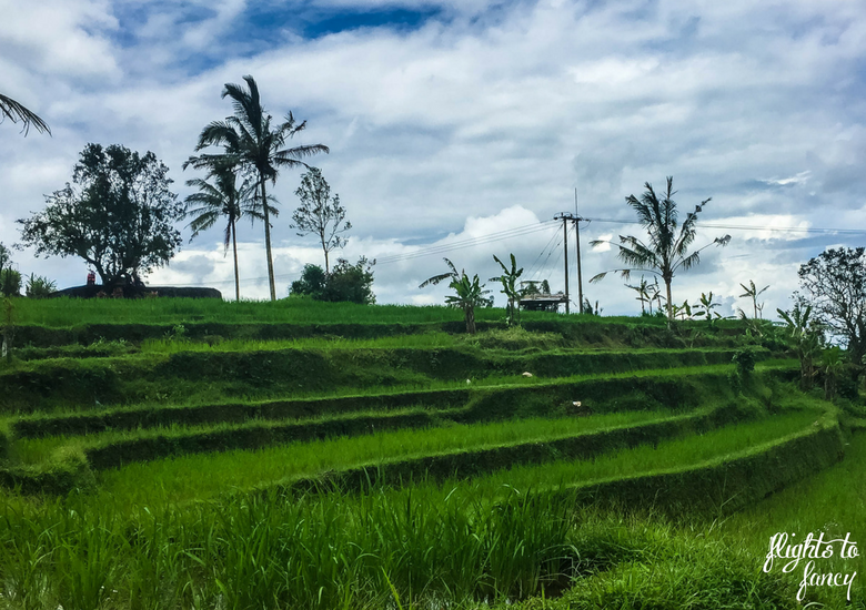 Flights To Fancy: 100+ Things To Do In Bali - Rice Terraces