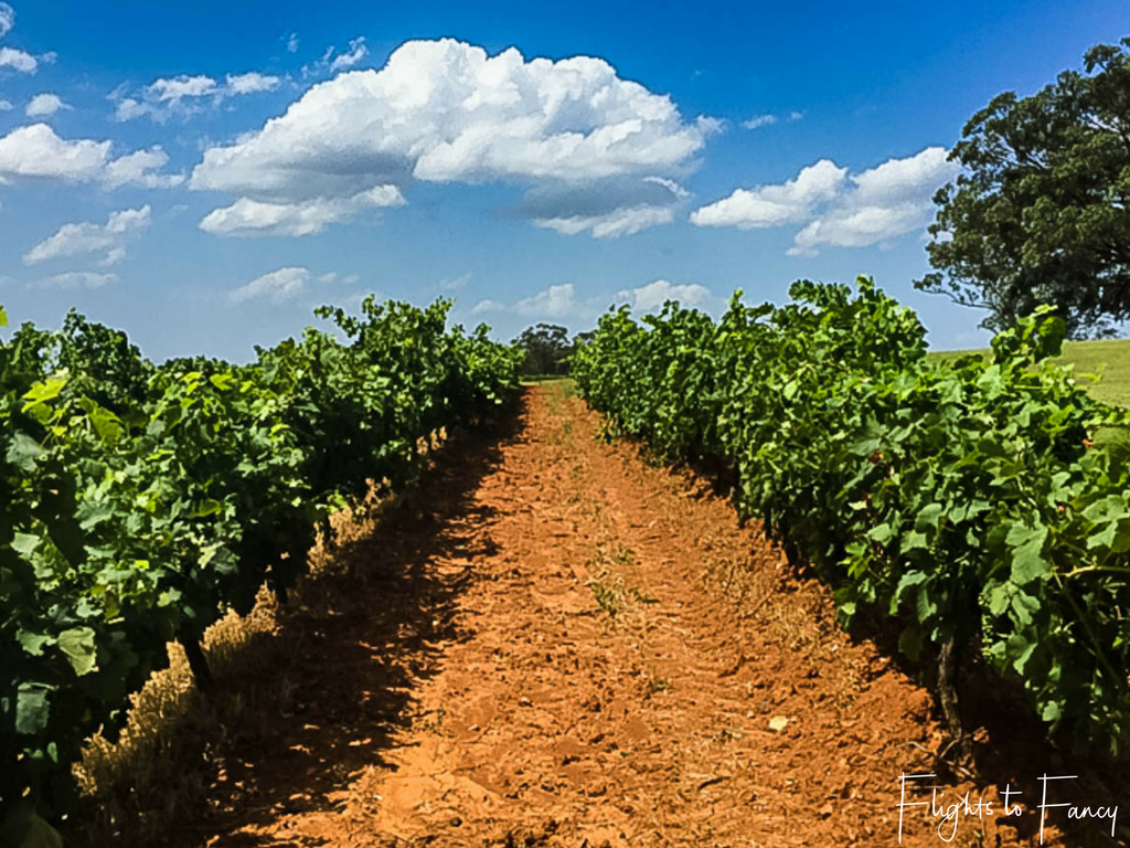 Long Weekend in the Hunter Valley: Vines at Tyrrell's Estate