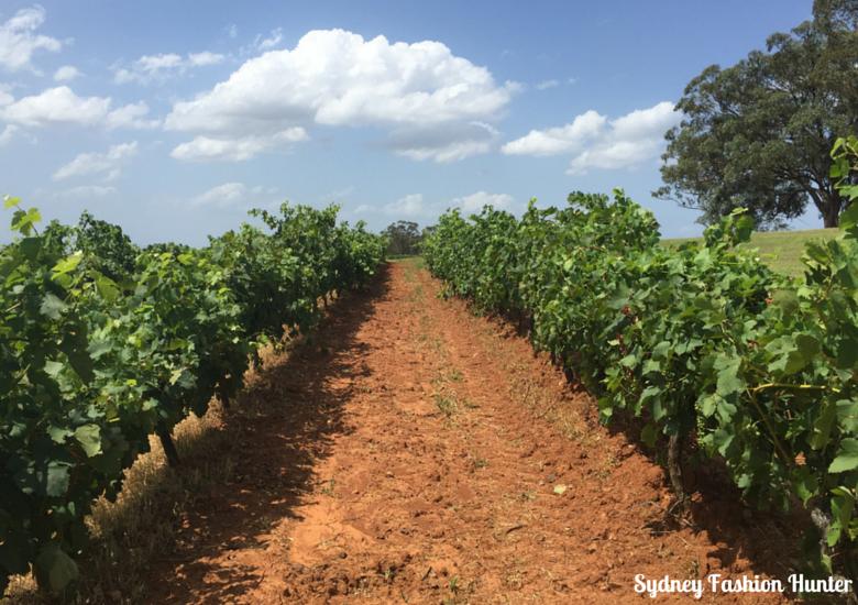 Tyrrell's Vineyard Hunetr Valley NSW Australia
