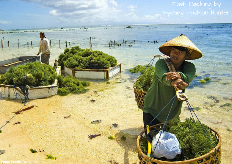 Fash Packing by Sydney Fashion Hunter: 23 Unexpected Things To Do In Bali - Seaweed Farming