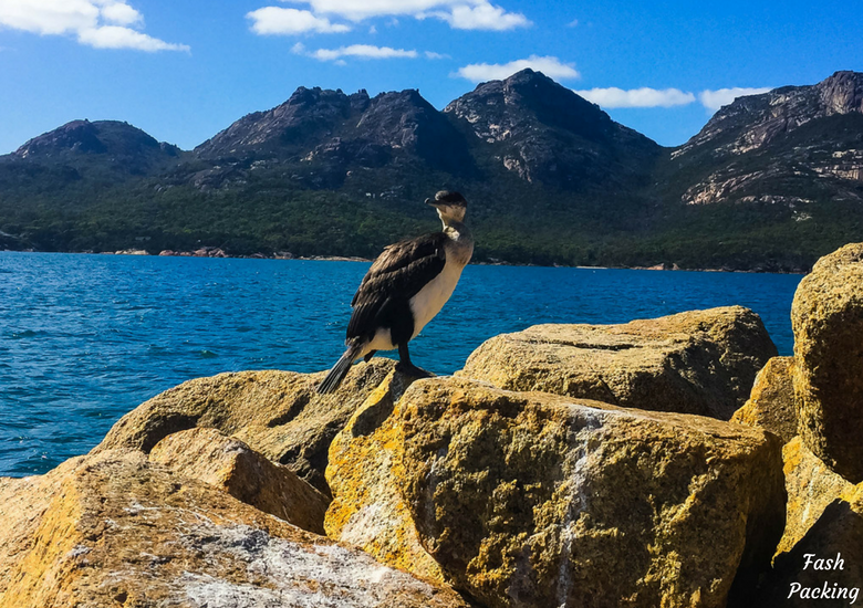 Fash Packing: Wineglass Bay Cruises Tasmania Exclusive Sky Lounge Experience - Bird