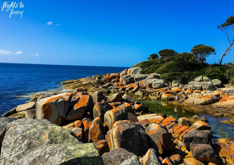 Flights To Fancy: Tasmanian Road Trip - Bay Of Fires