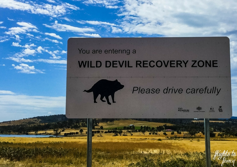Flights To Fancy: Tasmanian Road Trip - Tasmanian Devil Sign