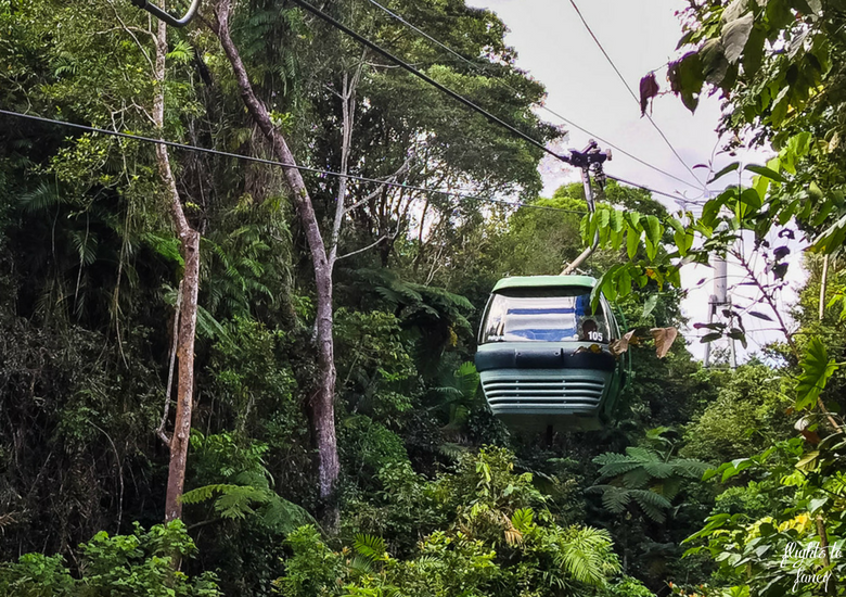 Flights To Fancy: Skyrail Rainforest Cableway Cairns - Cablecar in The Rainforest