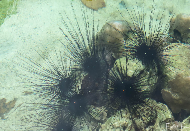 El Nido Tours - Sea Urchins Big Lagoon El Nido