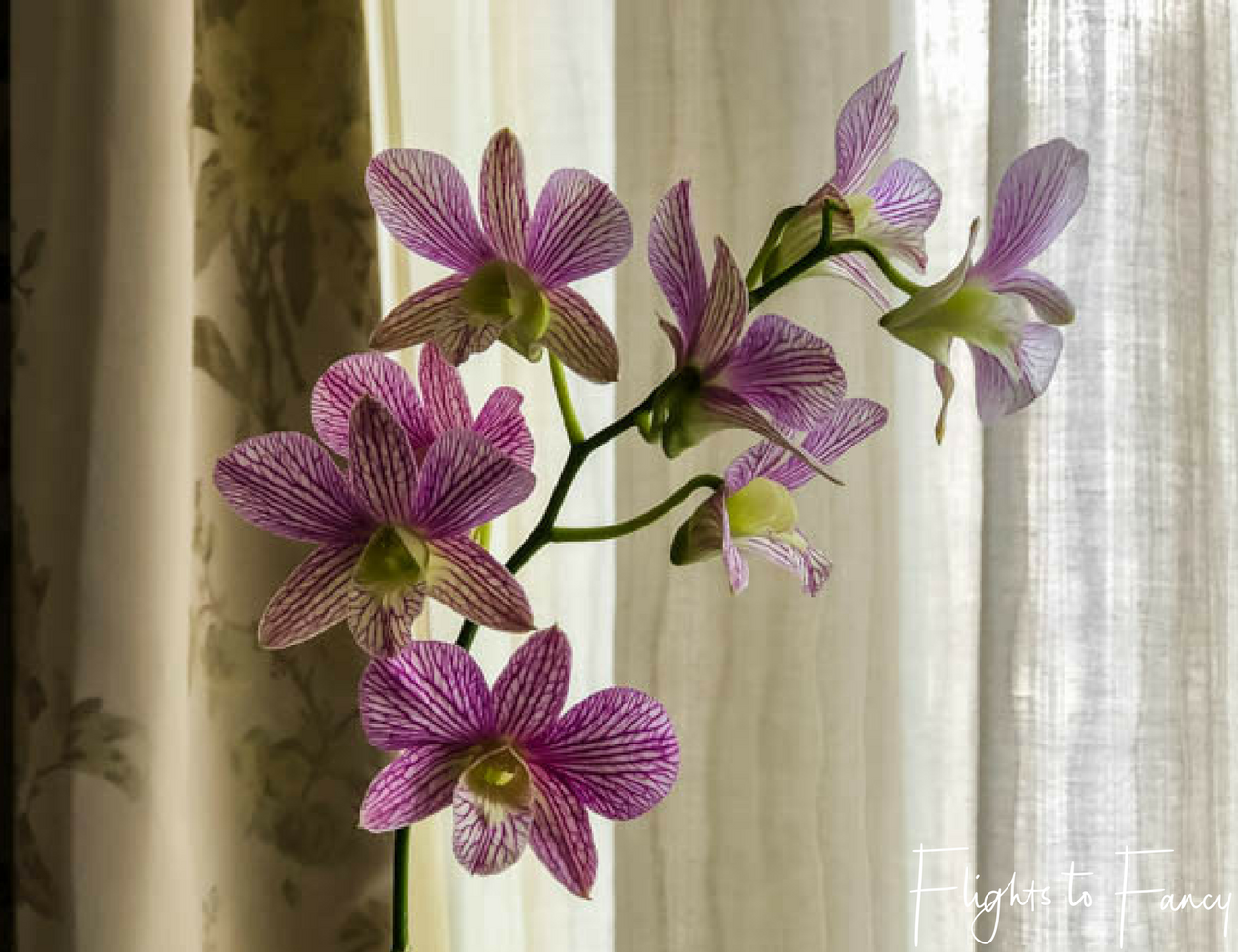 Flights To Fancy at Raffles Makati Manila - When you get fresh orchids you know you are in one of the top hotels in Makati