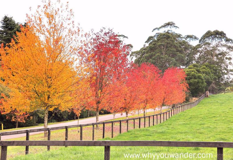 Sydney Getawys: Bowral