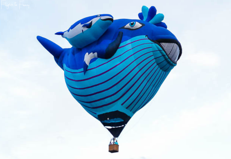 Canberra Balloon Festival - Whale