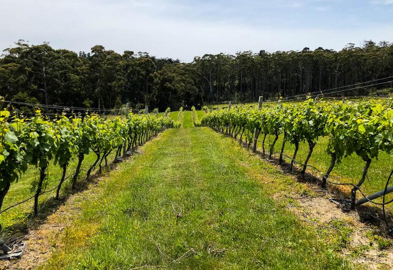 Bruny Island Premium Wines Vines