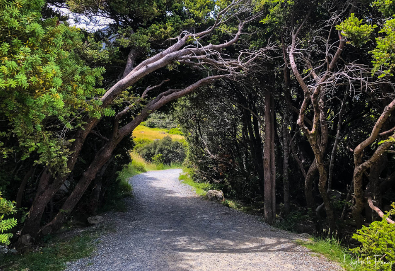 Mount Cook Walks: Hooker Valley Track Tree Arch