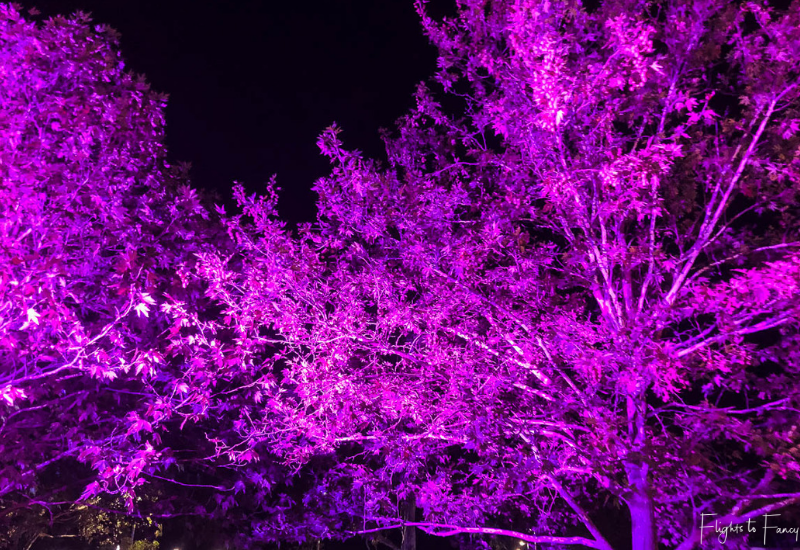 Enlighten Canberra - Illuminated Trees